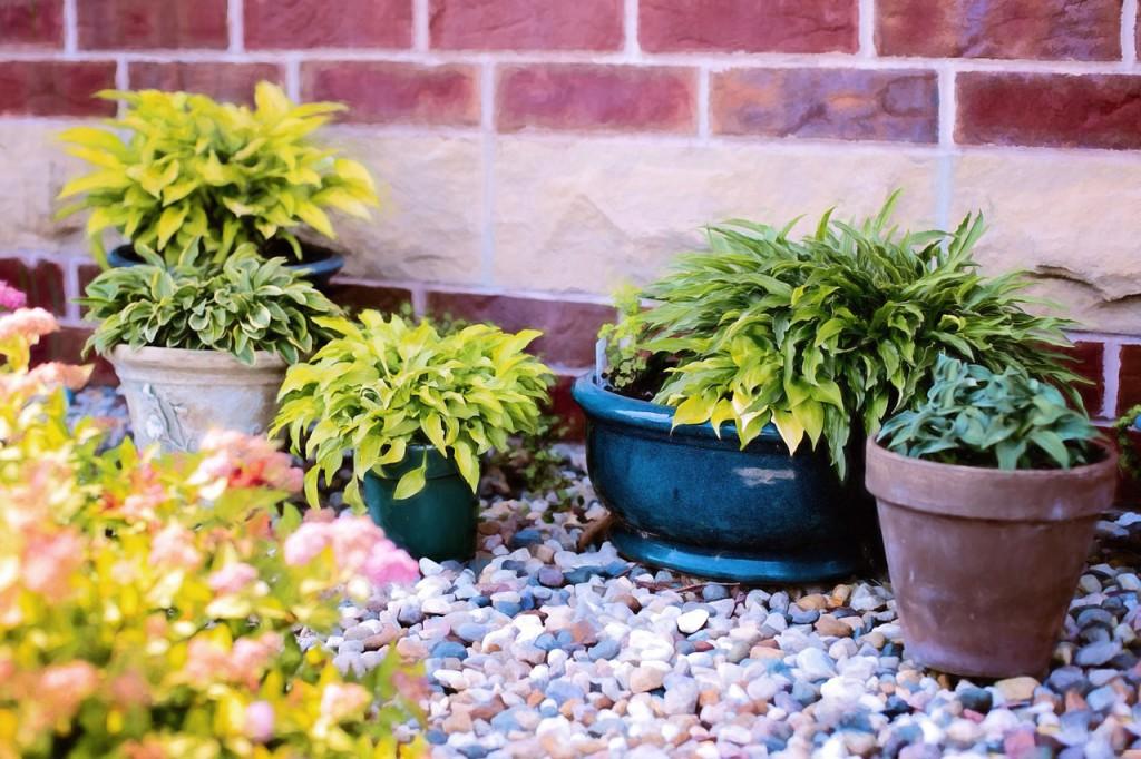 pot-plante