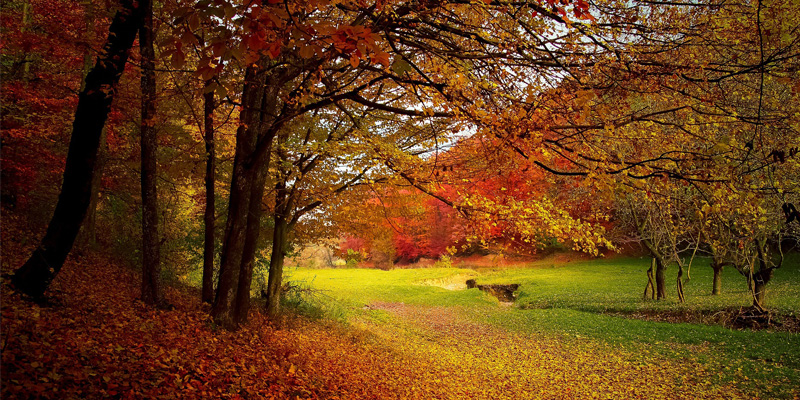 paysage-automne-barbecue