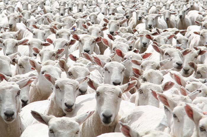 compter-les-moutons-train-sommeil