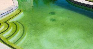 algues-vertes-eau-piscine