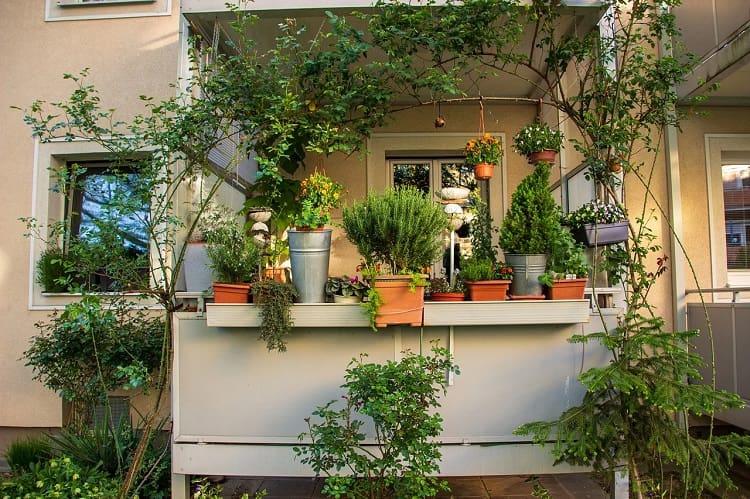 Balcon avec pots de fleurs