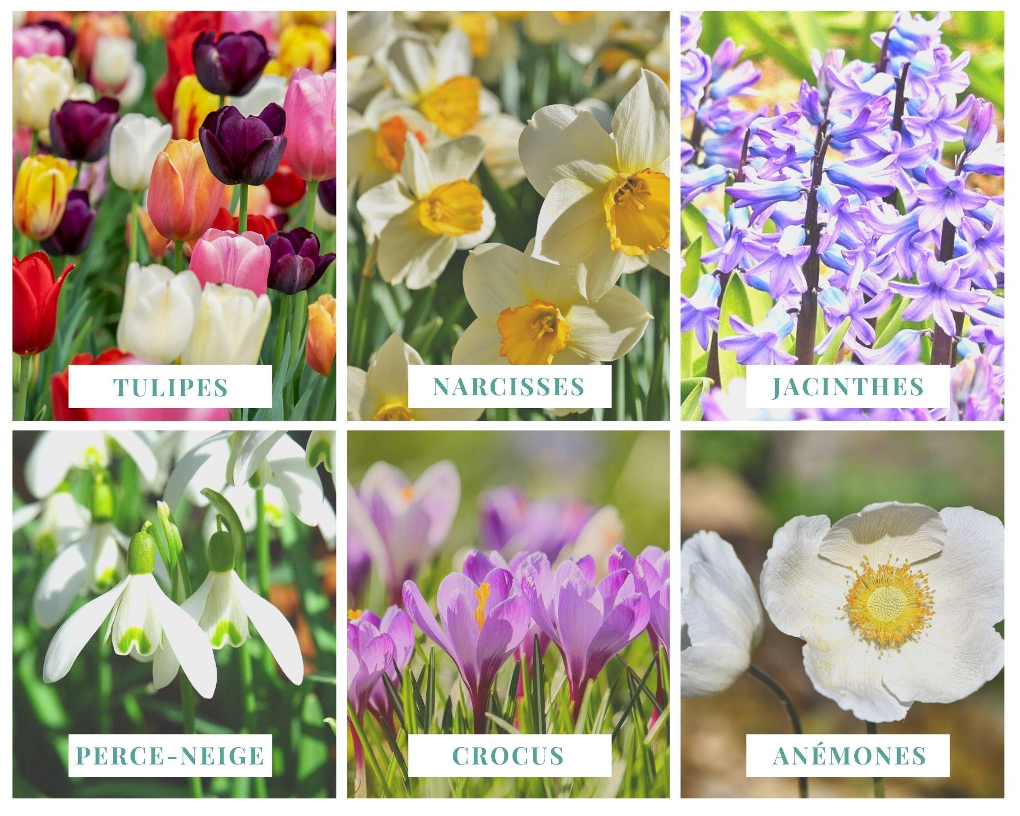 Espèces fleurs floraison printemps