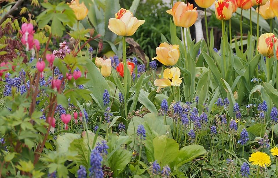 Parterre de fleurs à bulbes