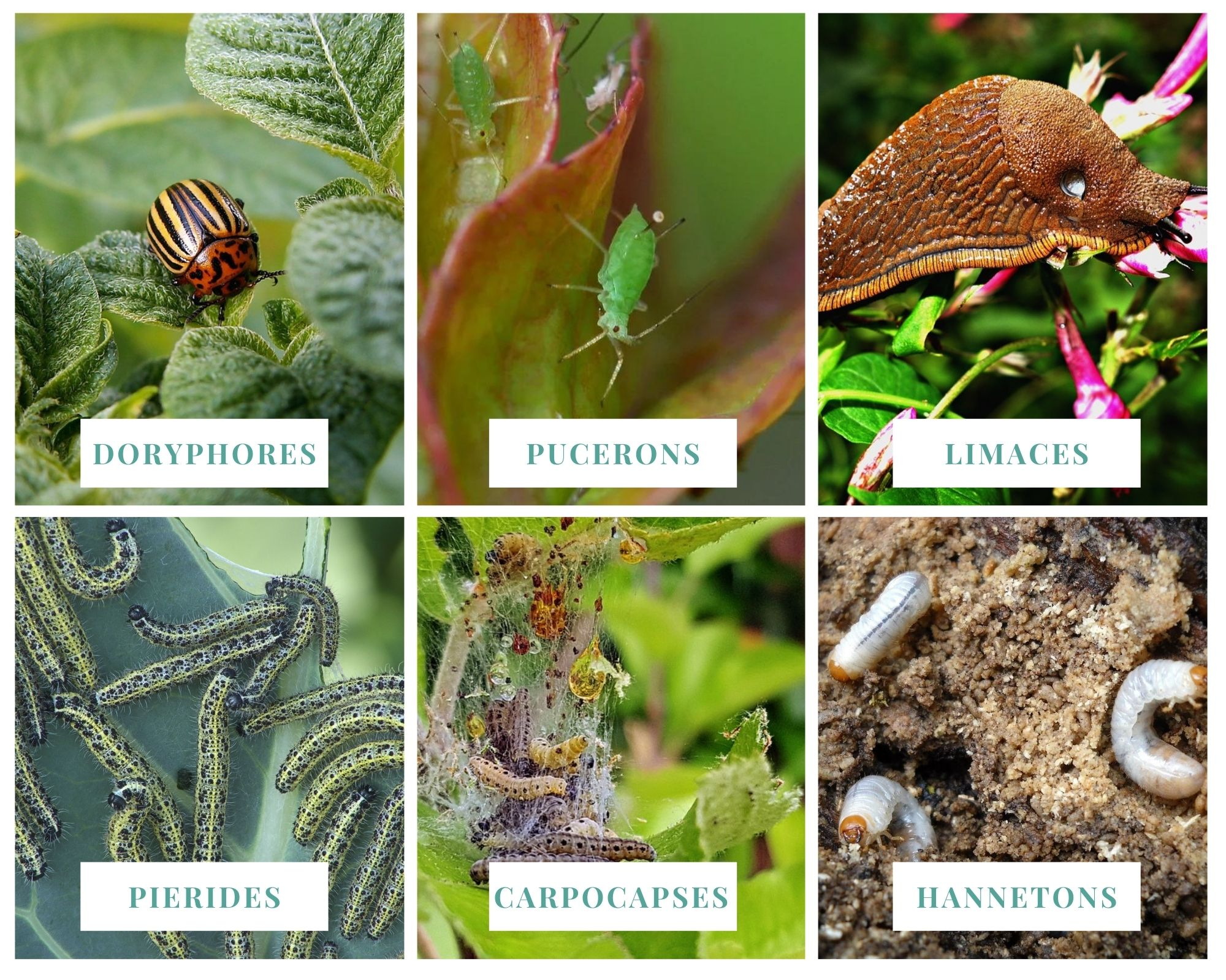 Insectes nuisibles jardin